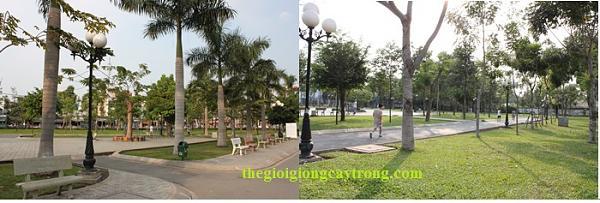 Cung cấp Giống cây Trồng, Cây cảnh, cây ăn quả, liên hệ thegioigiongcaytrong.com-c-y-d-bung-c-y-c-ng-tr-nh.jpg