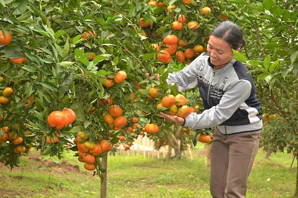 Vài chú ý khi trồng cây cam-cay-cam-canh.jpg